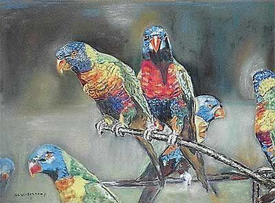 papagaaien_62820002.jpg